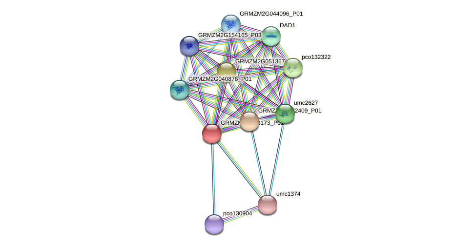 GRMZM2G133173_P01 protein (Zea mays) - STRING interaction network
