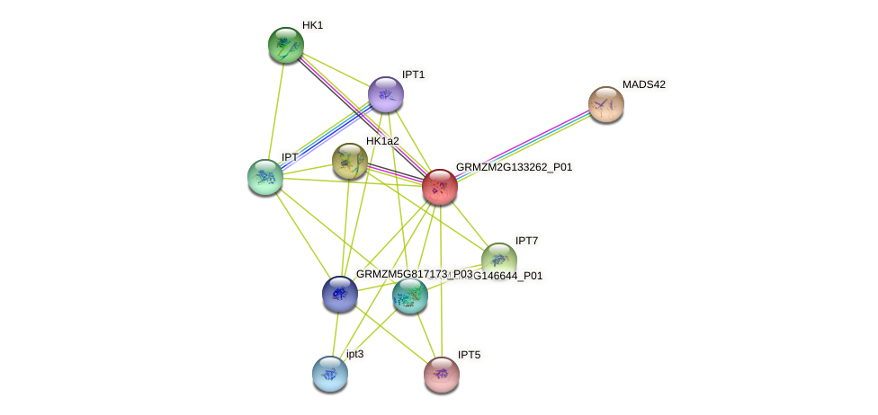 Zm.90876 protein (Zea mays) - STRING interaction network