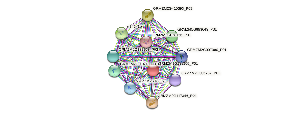 GRMZM2G133308_P01 protein (Zea mays) - STRING interaction network