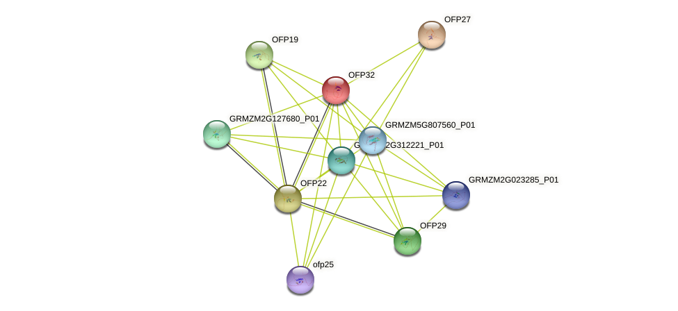 OFP32 protein (Zea mays) - STRING interaction network