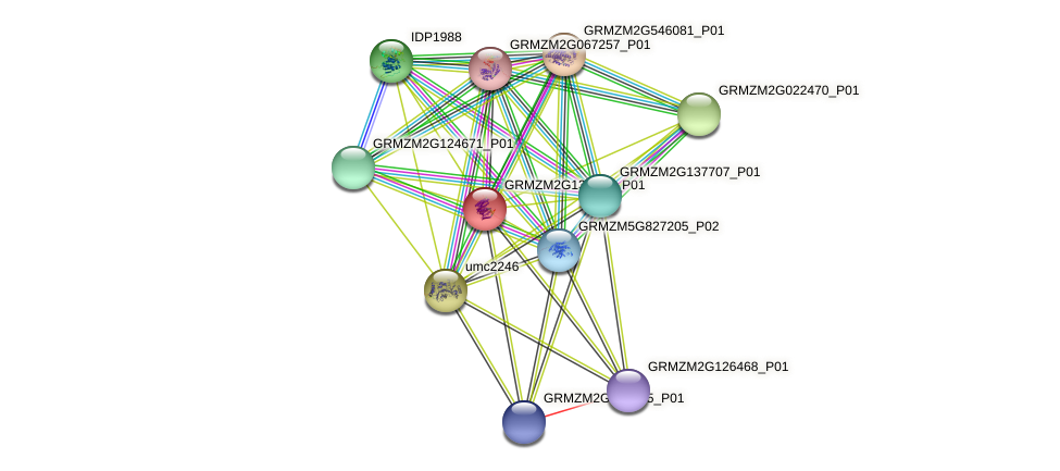 GRMZM2G133421_P01 protein (Zea mays) - STRING interaction network