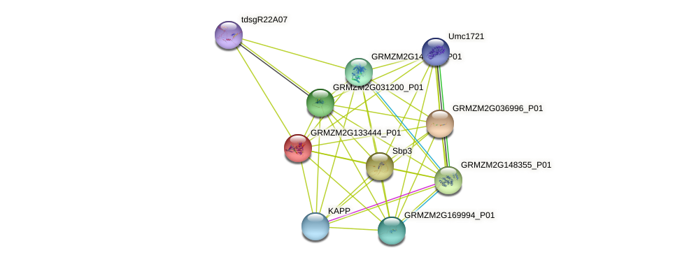 100383632 protein (Zea mays) - STRING interaction network
