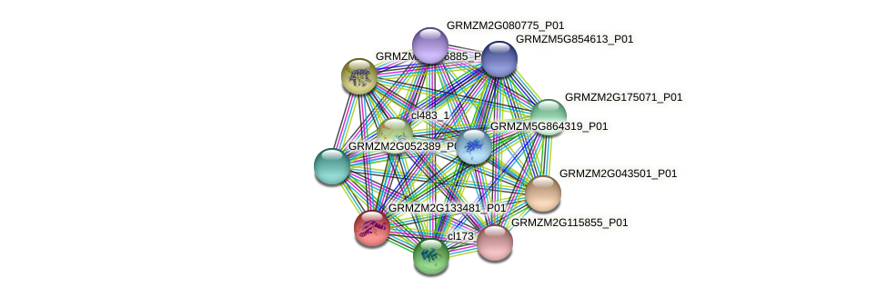 GRMZM2G133481_P01 protein (Zea mays) - STRING interaction network