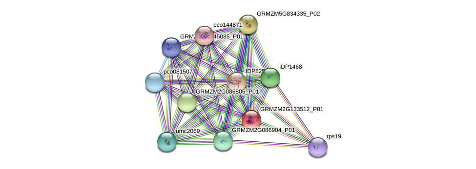 GRMZM2G133512_P01 protein (Zea mays) - STRING interaction network