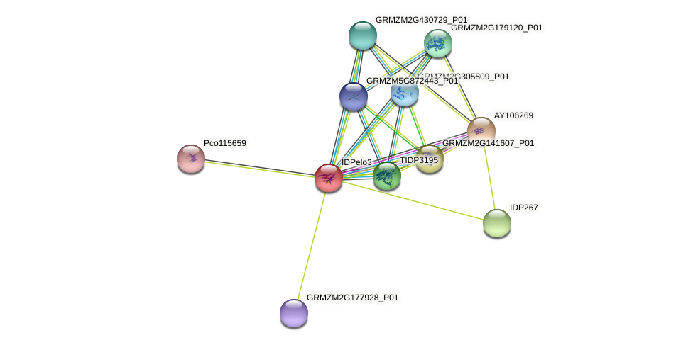 Zm.84877 protein (Zea mays) - STRING interaction network