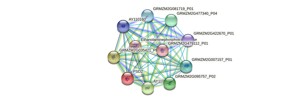 PSD2 protein (Zea mays) - STRING interaction network
