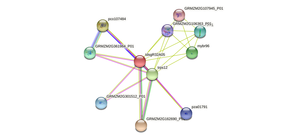 GRMZM2G133966_P01 protein (Zea mays) - STRING interaction network