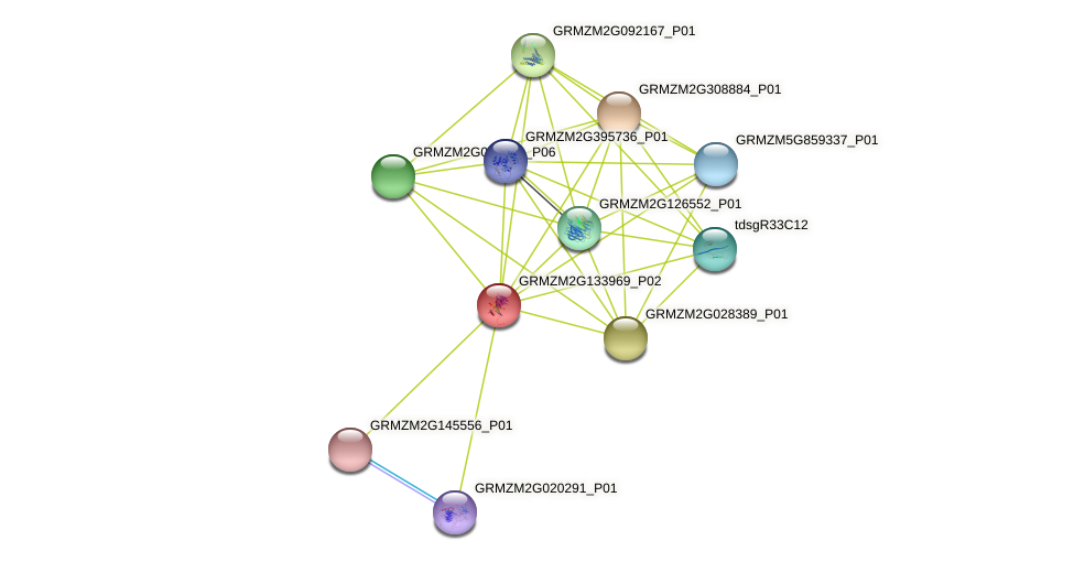 GRMZM2G133969_P02 protein (Zea mays) - STRING interaction network