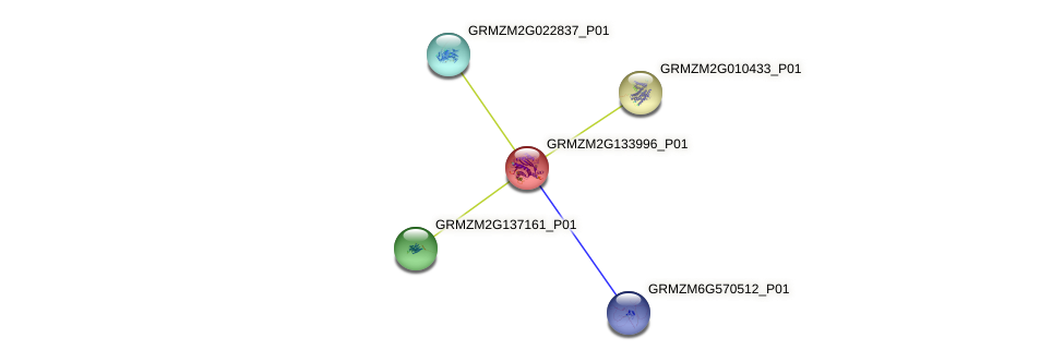 GRMZM2G133996_P01 protein (Zea mays) - STRING interaction network
