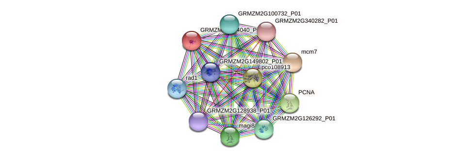 GRMZM2G134040_P01 protein (Zea mays) - STRING interaction network