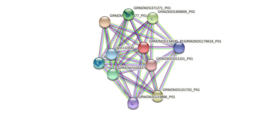 GRMZM2G134045_P01 protein (Zea mays) - STRING interaction network