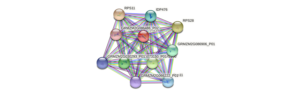 RPS21 protein (Zea mays) - STRING interaction network