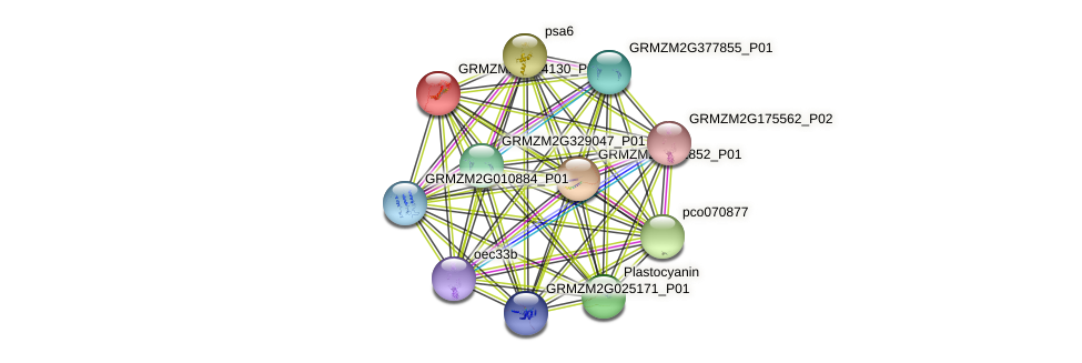 GRMZM2G134130_P01 protein (Zea mays) - STRING interaction network
