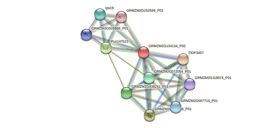 100216648 protein (Zea mays) - STRING interaction network