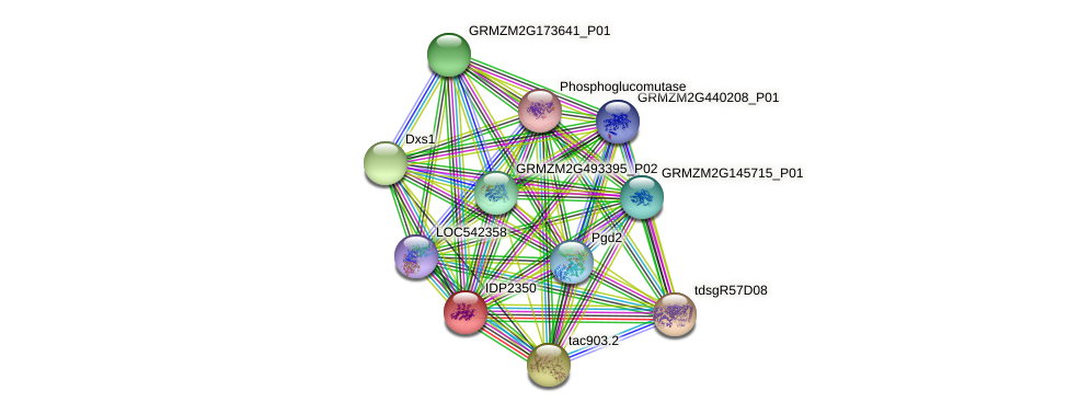 IDP2350 protein (Zea mays) - STRING interaction network