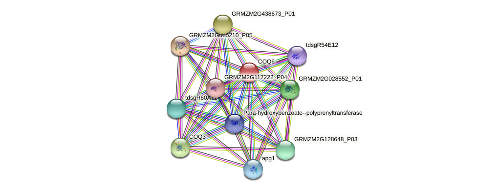 GRMZM2G134270_P01 protein (Zea mays) - STRING interaction network