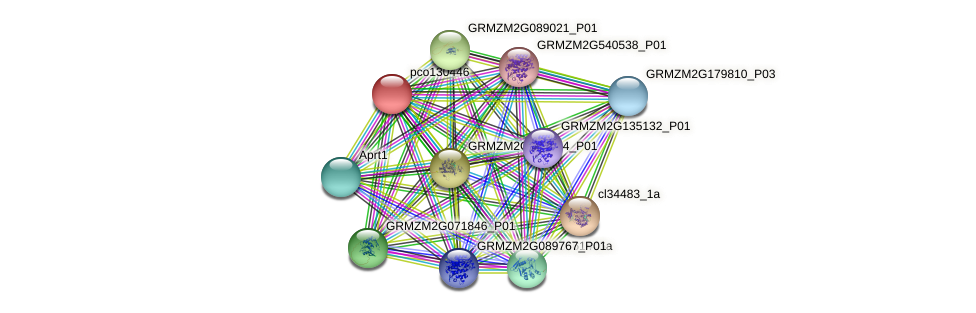 pco130446 protein (Zea mays) - STRING interaction network