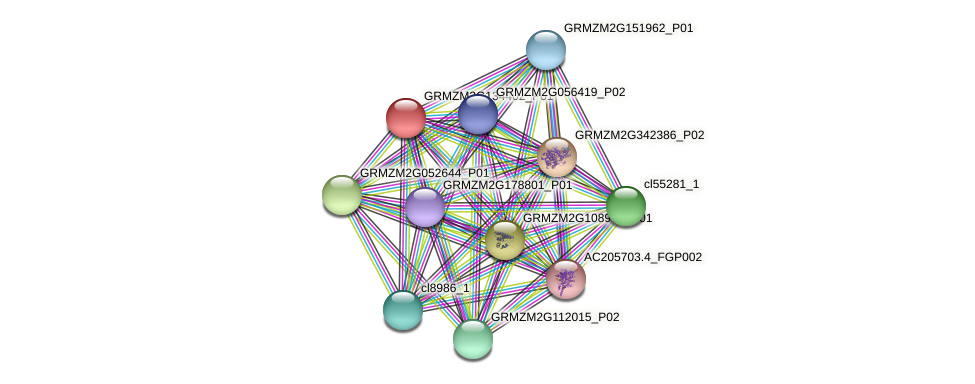 GRMZM2G134402_P01 protein (Zea mays) - STRING interaction network