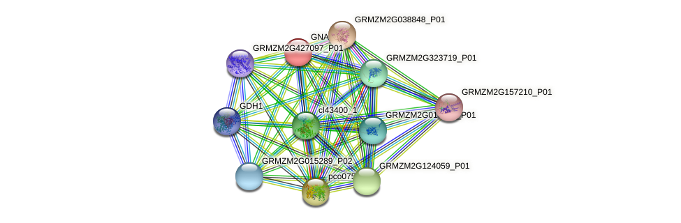 GNAT22 protein (Zea mays) - STRING interaction network
