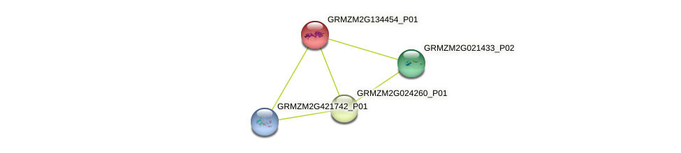 GRMZM2G134454_P01 protein (Zea mays) - STRING interaction network
