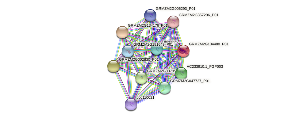 103633603 protein (Zea mays) - STRING interaction network