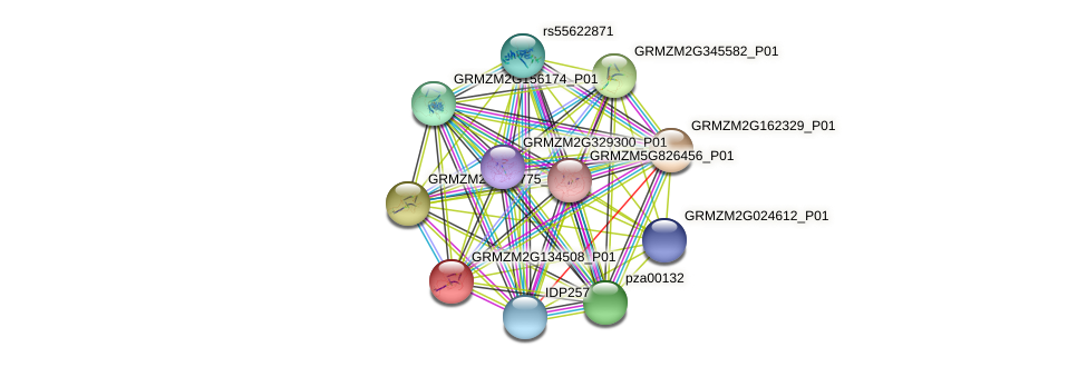 GRMZM2G134508_P01 protein (Zea mays) - STRING interaction network