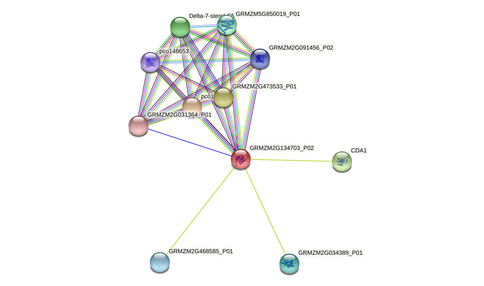 GRMZM2G134703_P02 protein (Zea mays) - STRING interaction network