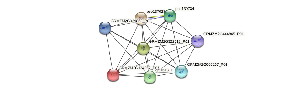 GRMZM2G134857_P01 protein (Zea mays) - STRING interaction network