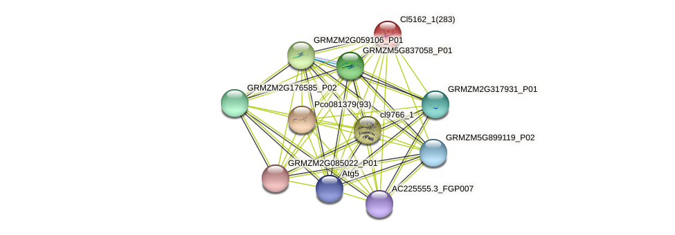 100275636 protein (Zea mays) - STRING interaction network