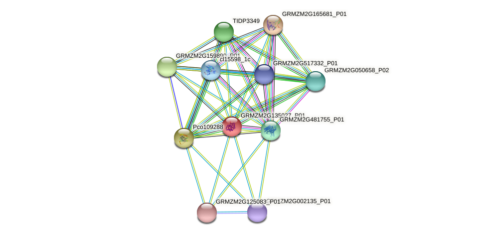 GRMZM2G135027_P01 protein (Zea mays) - STRING interaction network