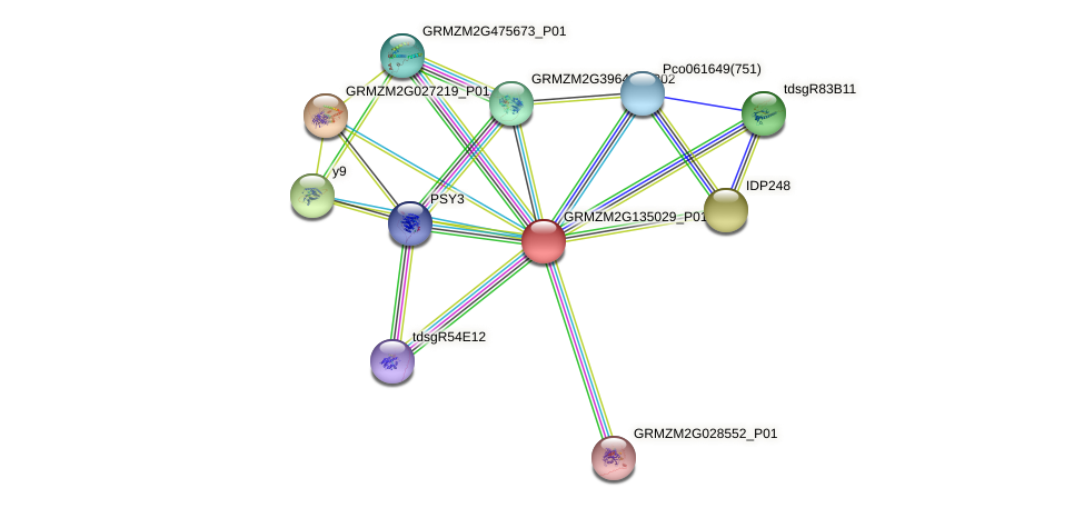 GRMZM2G135029_P01 protein (Zea mays) - STRING interaction network