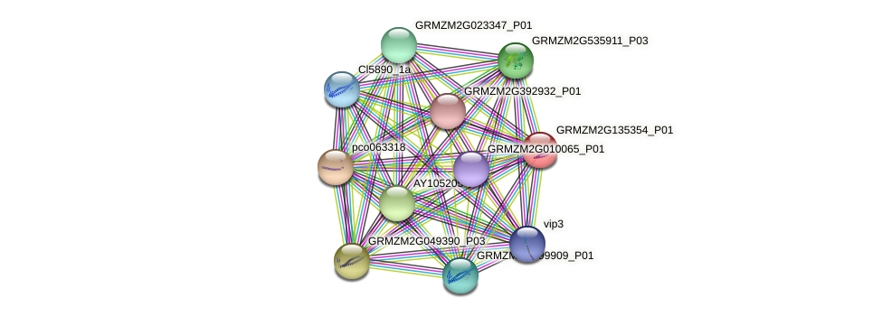 GRMZM2G135354_P01 protein (Zea mays) - STRING interaction network