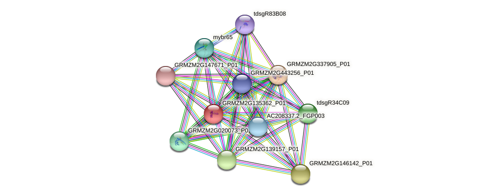 GRMZM2G135362_P01 protein (Zea mays) - STRING interaction network