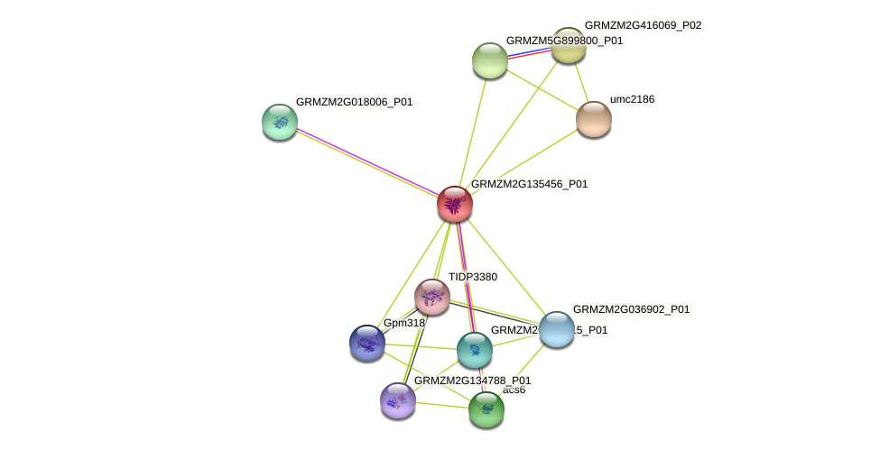 Zm.22197 protein (Zea mays) - STRING interaction network