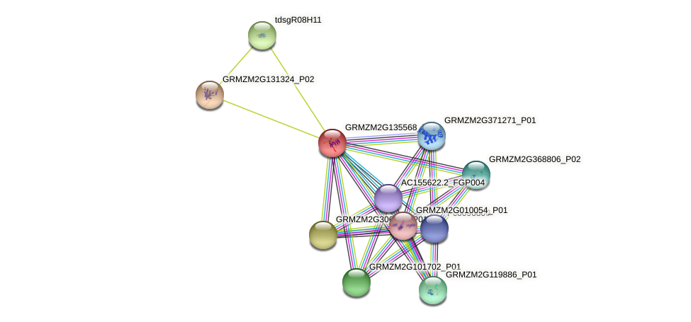 GRMZM2G135568_P01 protein (Zea mays) - STRING interaction network