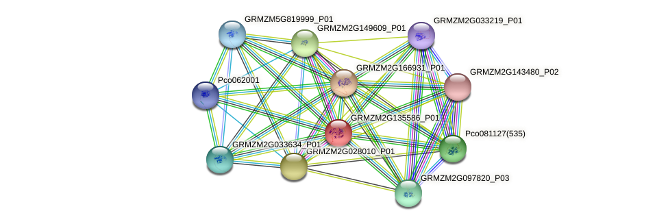 GRMZM2G135586_P01 protein (Zea mays) - STRING interaction network