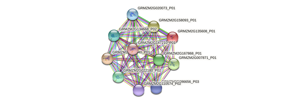 GRMZM2G135608_P01 protein (Zea mays) - STRING interaction network