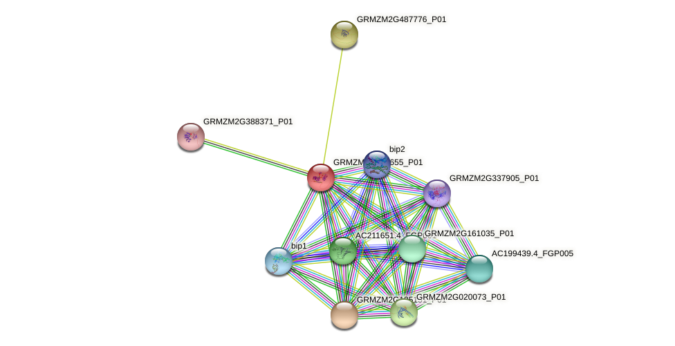 GRMZM2G135655_P01 protein (Zea mays) - STRING interaction network