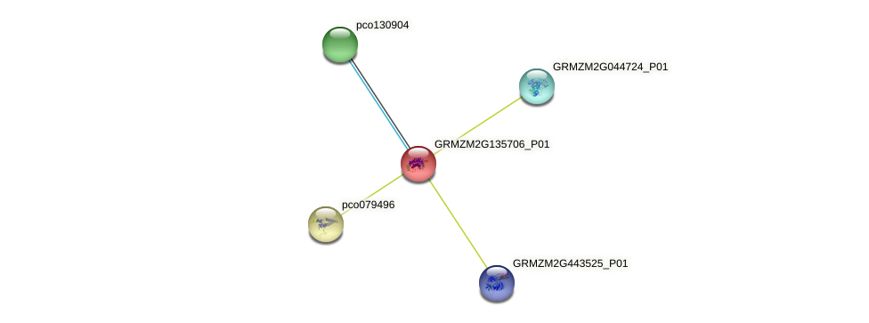 GRMZM2G135706_P01 protein (Zea mays) - STRING interaction network