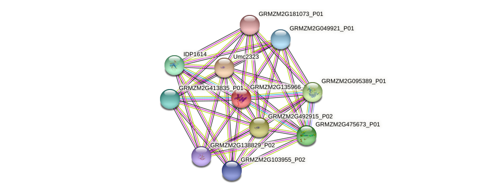 GRMZM2G135966_P01 protein (Zea mays) - STRING interaction network