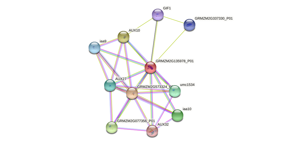 Zm.29941 protein (Zea mays) - STRING interaction network