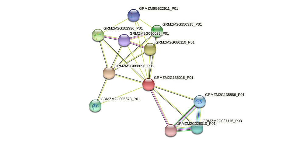 GRMZM2G136016_P01 protein (Zea mays) - STRING interaction network