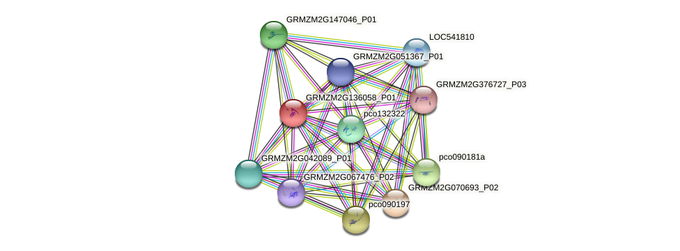 GRMZM2G136058_P01 protein (Zea mays) - STRING interaction network