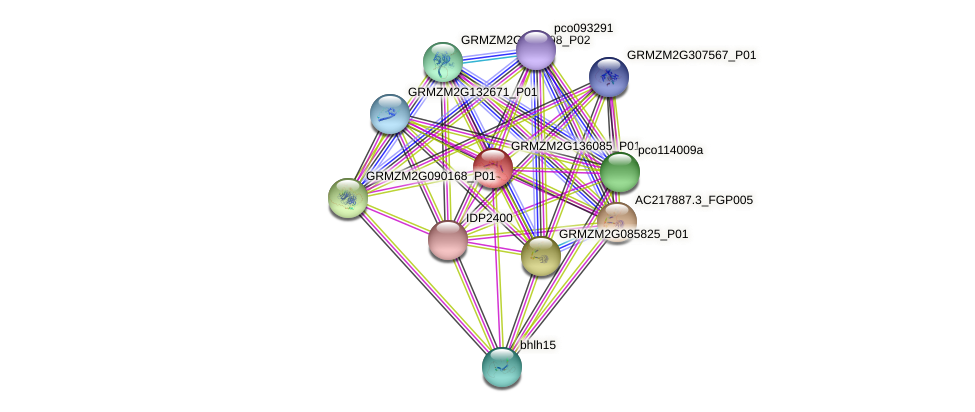GRMZM2G136085_P01 protein (Zea mays) - STRING interaction network