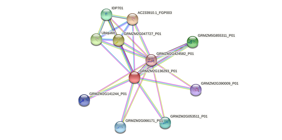 Zm.25887 protein (Zea mays) - STRING interaction network