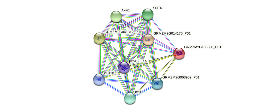 Zm.16510 protein (Zea mays) - STRING interaction network
