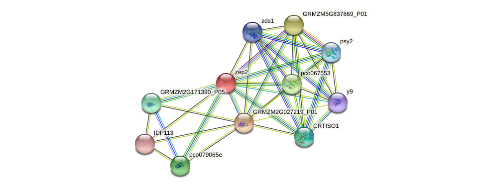 FHA11 protein (Zea mays) - STRING interaction network