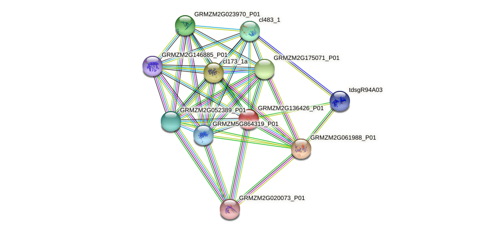 GRMZM2G136426_P01 protein (Zea mays) - STRING interaction network