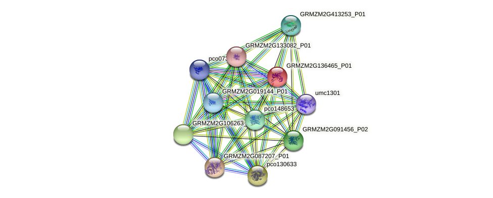GRMZM2G136465_P01 protein (Zea mays) - STRING interaction network