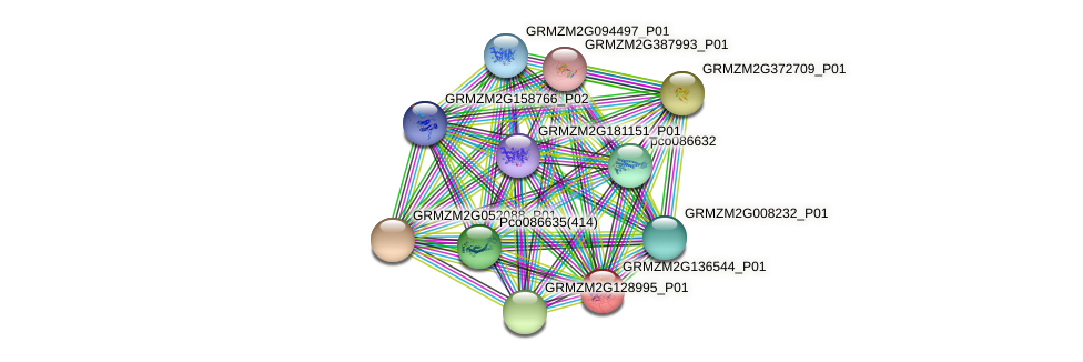GRMZM2G136544_P01 protein (Zea mays) - STRING interaction network
